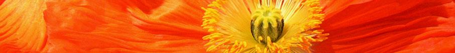 fotokaufen.ch - Fotos für auf Leinwand und Aluminium - zum Download - auf Hochglanzpapier - als Hintergrundbeleuchtetes Bild